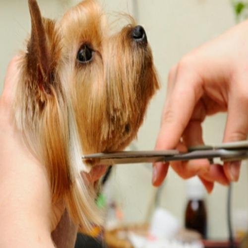 Pet grooming fort lauderdale